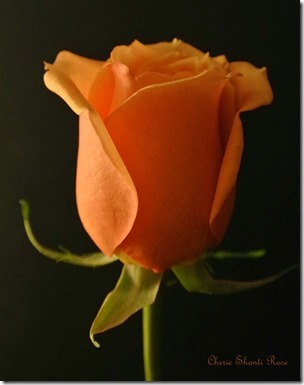 InnerPathWisdom.com/Sisterhood-of-the-Rose