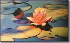 Lotus - cropped frame[4]